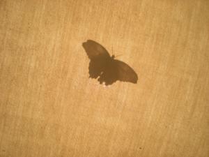 Butterfly album