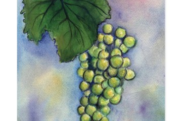 White Wine Chardonnay Grapes Watercolor Art Painting Merchandise and Custom Gifts