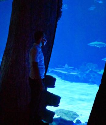 A picture of my boyfriend, Cody, at the Mandalay Bay Shark Reef Aquarium. He is in the last main room of the aquarium that features an almost shipwrecked sort of aesthetic and has huge panes of glass for you to see all the sharks and sea life swim by.