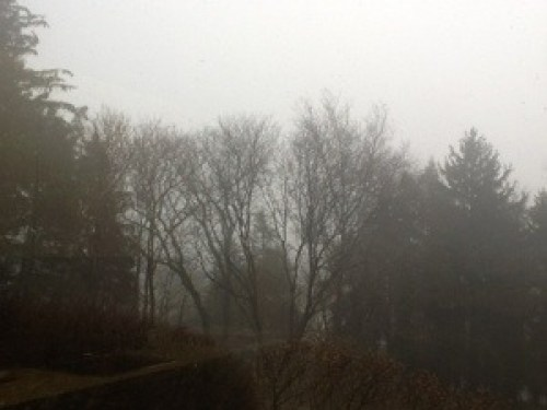 Fog covers the bare winter trees