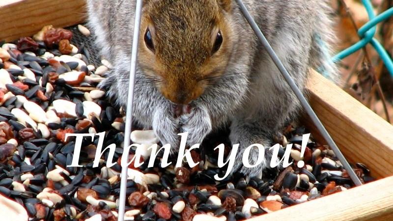 Thank You! squirrel