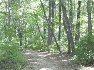 path in Wissahickon Forest