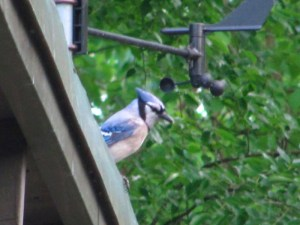 Blue Jay planning its next move