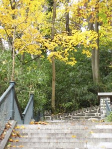 The 'Hundred Steps' in the Wissahickon Valley Park.