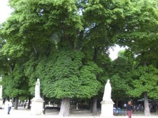 trees and sculptures