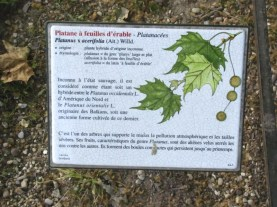 specie info about the tree