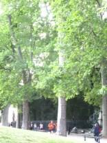 a deep shady grove of trees