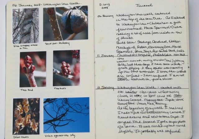 Donna's nature journal April 18, 2015