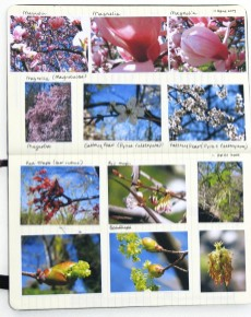 my nature journal for 11 April 2009
