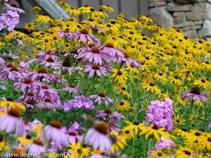 A Cottage Garden, What is It? Is it our natural way of life?