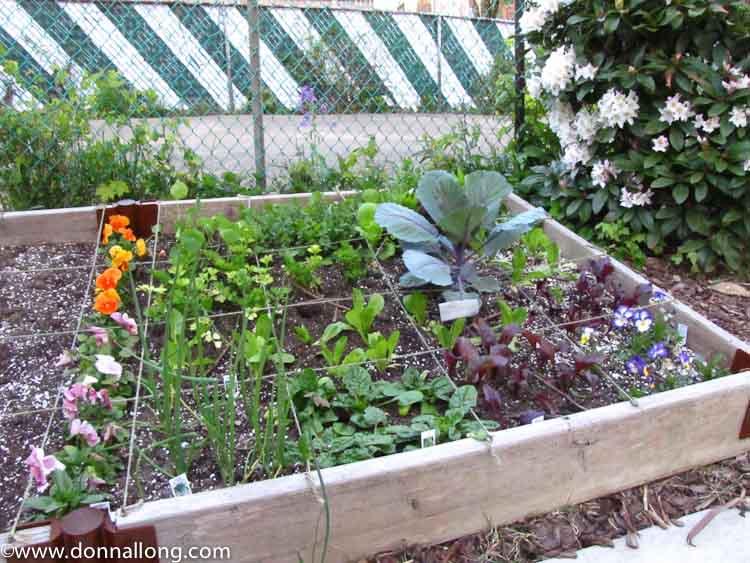 A spring vegetable plot in my cottage garden.