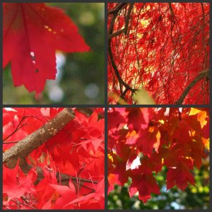 red nature in autumn collage