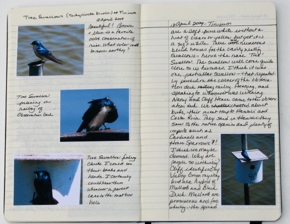 nature journal entry for 18 April 2017