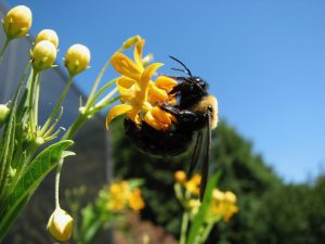 Pollinator Syndromes: How to Predict Which Flowers Insects Will Like