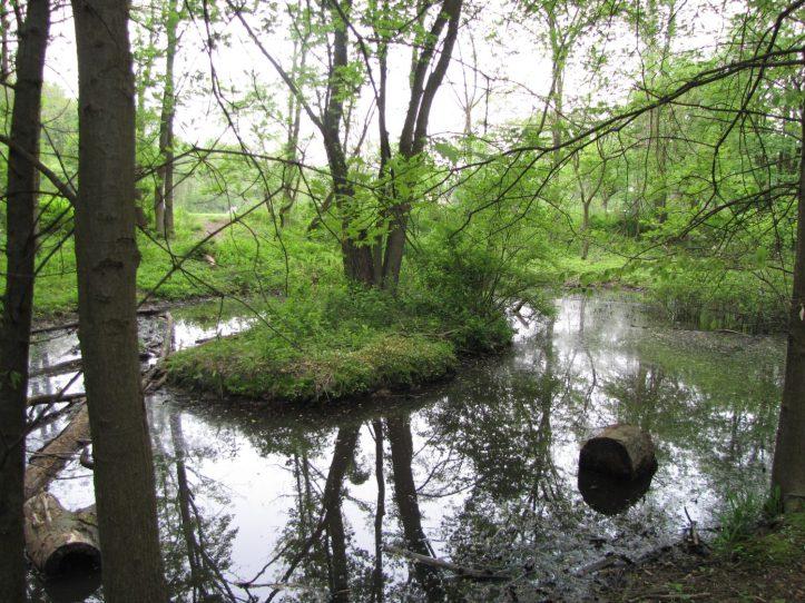 The enhanced pool - Tacony/Tookany-Frankord Creek Partnership, Photo by Donna L. Long.