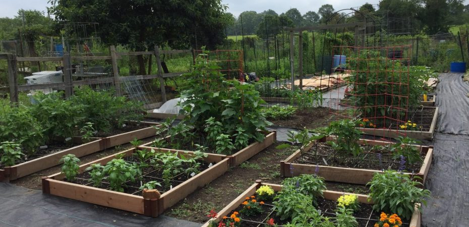 My community garden plot. Photo by Donna L. Long.