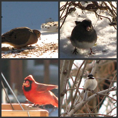 A collage of winter birds in my garden.
