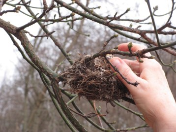 probably a warbler, maybe Vireo nest