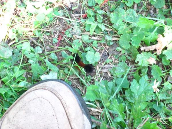 woolly bear caterpillar at my feet