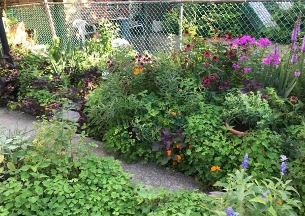 garden_flower bed backyard habitat garden
