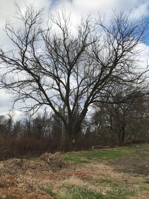 Bare deciduous tree in winter
