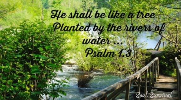 Psalm 1.3 tree river