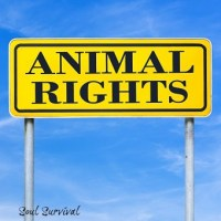 Animal rights written on yellow road sign over blue sky.