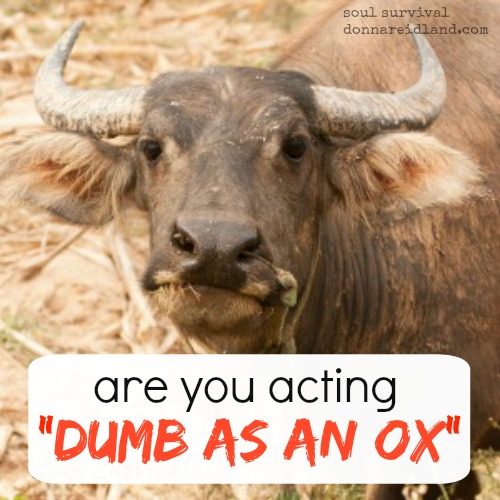 "Are you acting ""dumb as an ox""? - God says there is a time when we can truly be ""dumb as an ox,"" but it has nothing to do with intelligence. How can understanding what really happened at the Cross help us overcome our own tendency toward foolishness and stupidity and, instead, help us grow in wisdom?"