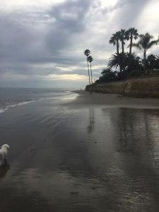 dog walking on miramar beach in santa barbara at sunset