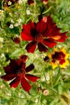 Aiuole in fiore