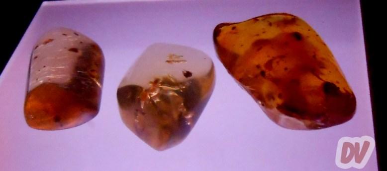 Campioni di ambra con inclusioni vegetali e animali