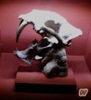 Cranio di Smilodonte, la trigre dai denti a sciabola