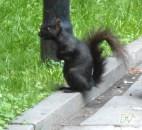 Uno scoiattolino osserva...