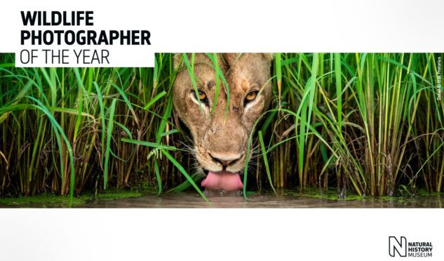 Le Mostre più belle: Wildlife Photographer of the Year – Milano 2019