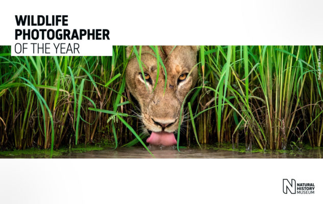 wildlife-photographer-of-the-year-milano-2019-633x400