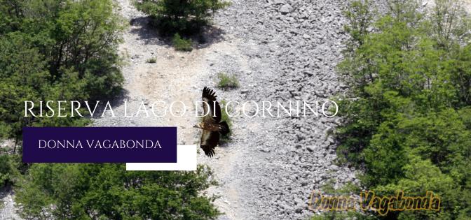 Un'escursione in giornata: Riserva Lago di Cornino