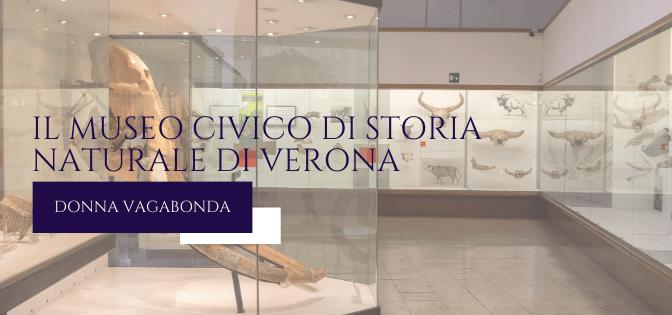 Il Museo del mese di Novembre: il Museo Civico di Storia Naturale di Verona