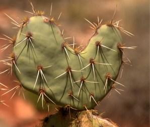 A sharp heart, Sedona AZ