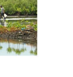 kerusakan hutan mangrove di pantai utara pantura cirebon jawa barat kian luas saat ini hutan mangrove di kabupaten cirebon tinggal 70 hektare atau 5 4  [ 1230 x 669 Pixel ]