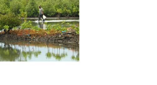 small resolution of kerusakan hutan mangrove di pantai utara pantura cirebon jawa barat kian luas saat ini hutan mangrove di kabupaten cirebon tinggal 70 hektare atau 5 4