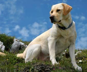 Melhores Cães Para Fazenda Melhores Cães Para Fazenda