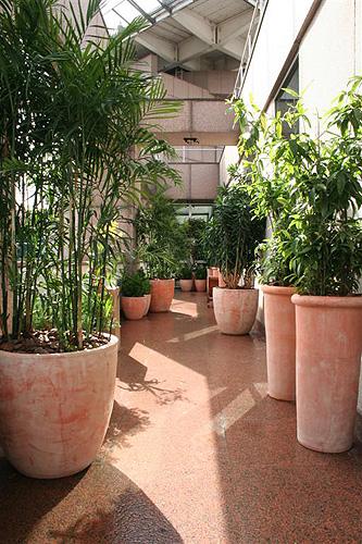 Modelos de Vasos de Plantas Modelos de Vasos de Plantas