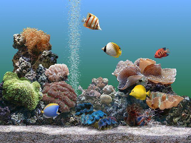 Como Cuidar de Um Aquário de Peixes Como Cuidar de Um Aquário de Peixes Exóticos