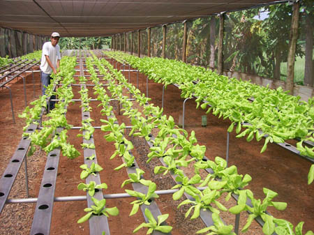Colégio Agrícola Melhores Opções Colégio Agrícola, Melhores Opções