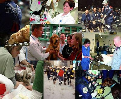 medicina 20veterinaria Faculdades de Medicina Veterinária, Preços, Onde Fazer