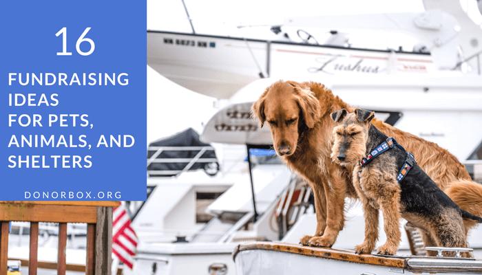 a7f1a93b82ed 16 Effective Animal Shelter Fundraising Ideas - Pet Fundraiser Ideas