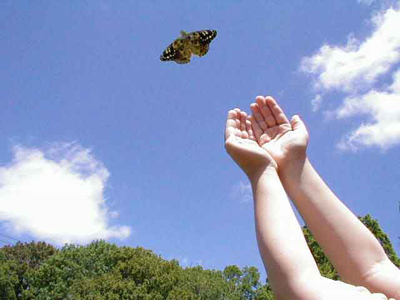 detachment - letting go of a butterfly