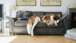 The Difference Between Couch And Sofa Just In Case You Didn't Know