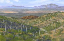 Saguaro National Park by Western pastel landscape artist Don Rantz