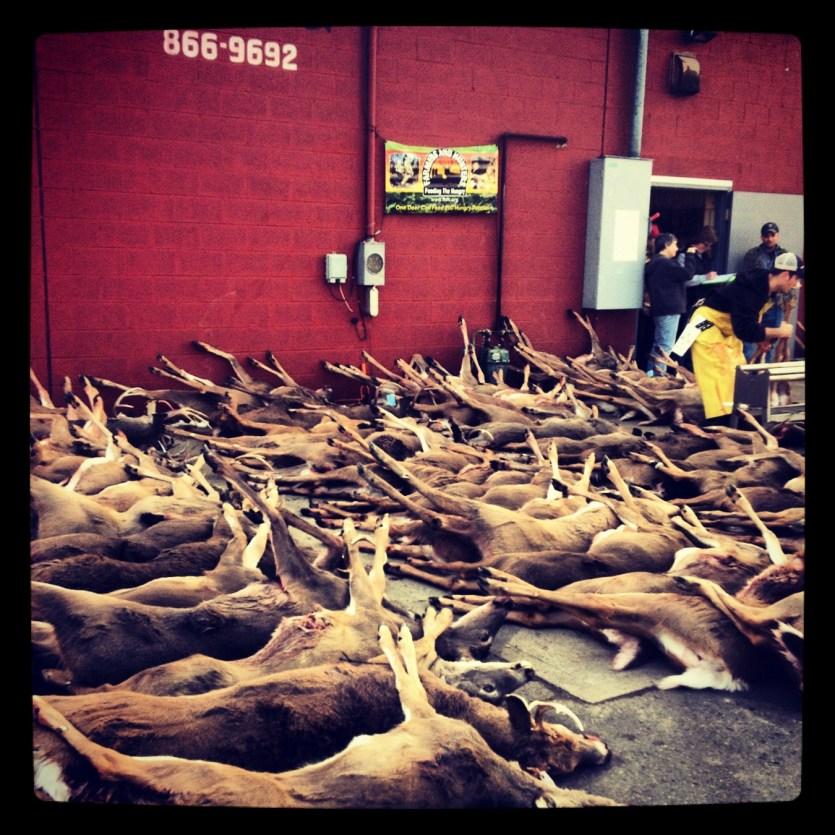 Some deer from Monday's gun season